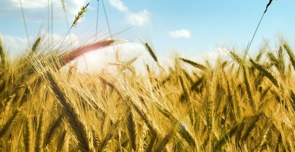 Které výživové teorie upřednostňujeme?