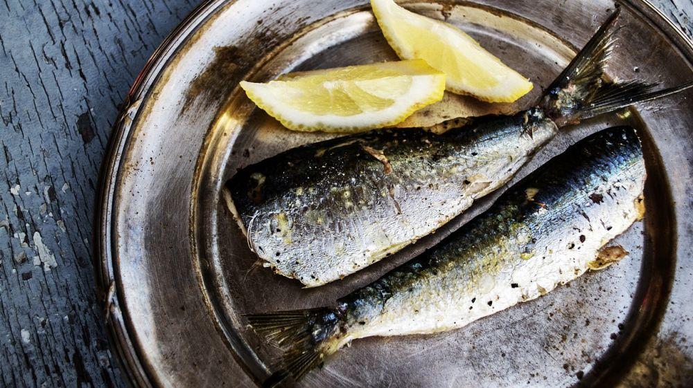 Tuky - ryby